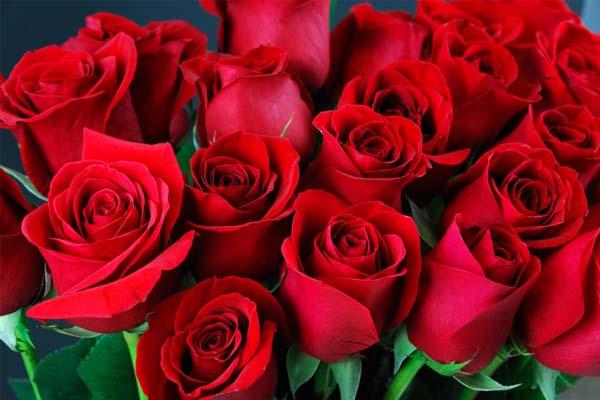lilas-fleurs-fleuriste-fetes